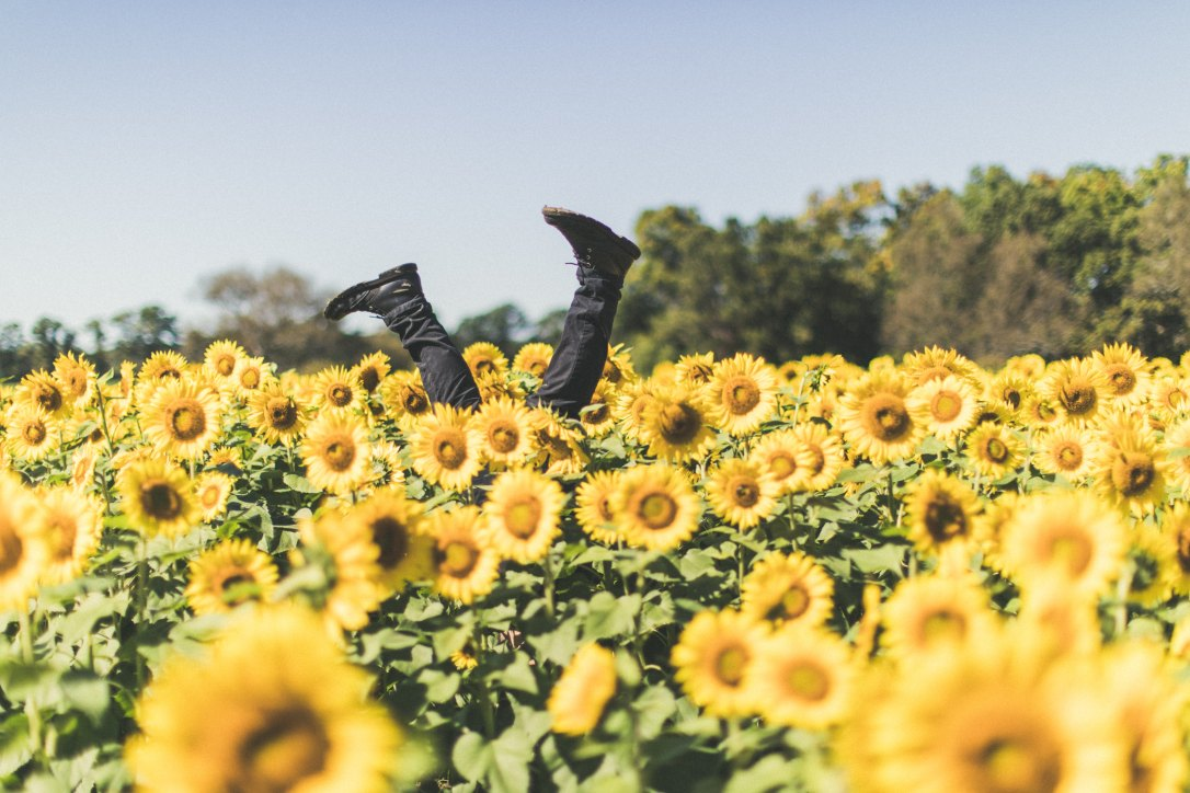 Legs in sunflowers.jpg