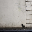 Cat and ladder