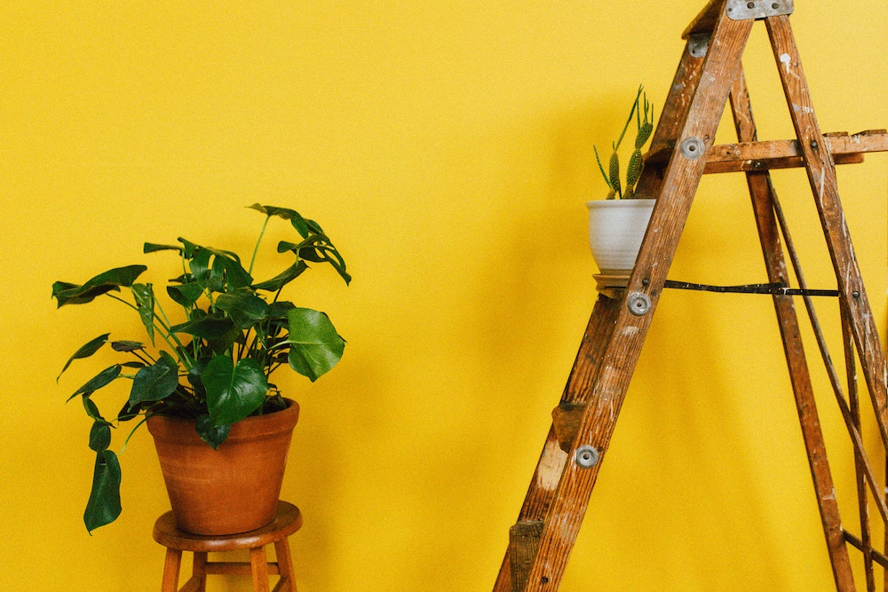 Plant on ladder.jpg