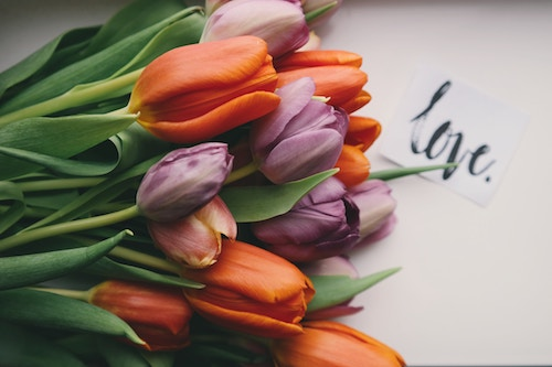 Tulips love 500