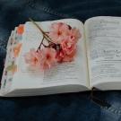 Flower on book