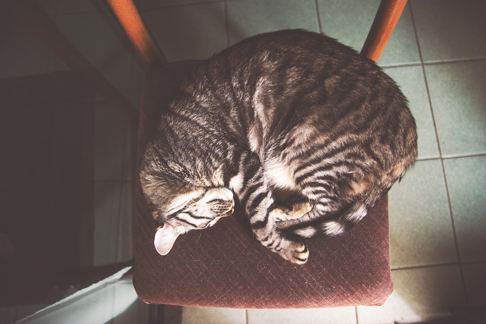 cat asleep.jpg
